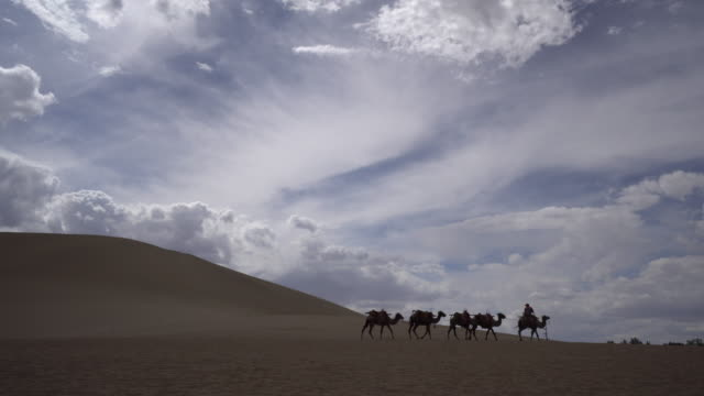 as one of famous travel destinations beside mogao caves in dunhuang not only for the beautiful scenery of desert the mingsha shan desert is also a... - hovdjur bildbanksvideor och videomaterial från bakom kulisserna