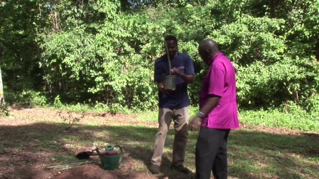 as part of his visit to jamaica in 2012 the archbishop of york dr john sentamu dr john sentamu plants tree on january 23 2012 in jamaica - emma brumpton stock videos & royalty-free footage