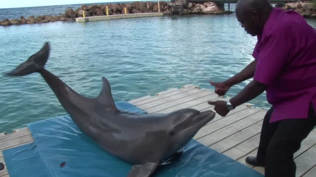 as part of his visit to jamaica in 2012 the archbishop of york dr john sentamu met mitch the dolphin dr john sentamu meets mitch the dolphin on... - emma brumpton stock videos & royalty-free footage