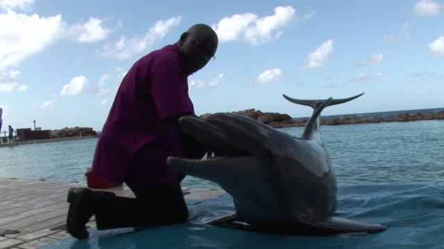 as part of his visit to jamaica in 2012 the archbishop of york dr john sentamu met mitch the dophin dr john sentamu meets mitch the dolphin on... - emma brumpton stock videos & royalty-free footage