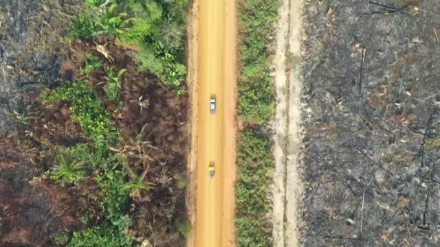 as the amazon continues to burn world leaders are quibbling about funding to help fight the fires shows drone aerial shots of the transamazonian... - アマゾン熱帯雨林点の映像素材/bロール