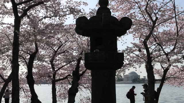 as the thomas jefferson memorial is seen in the background, visitors pass by a japanese stone lantern as they enjoy cherry blossoms at tidal basin in... - thomas jefferson stock videos & royalty-free footage