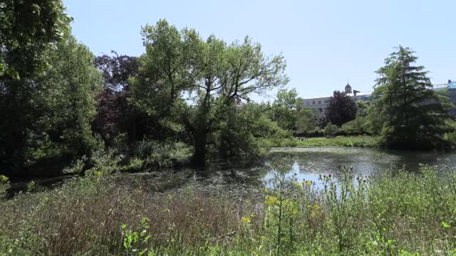 as the weather in london heats up, people are out and about enjoying the sunshine in the city's green spaces. people were out dog walking and cycling... - sunlight stock videos & royalty-free footage