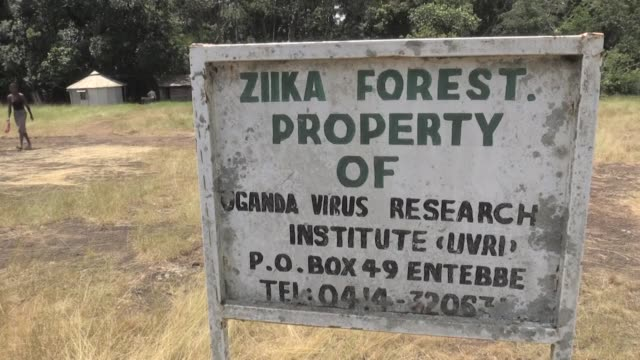 as the zika virus spreads to the usa and europe, officials from the us centers for disease control and prevention have released new guidelines for... - virus zika video stock e b–roll