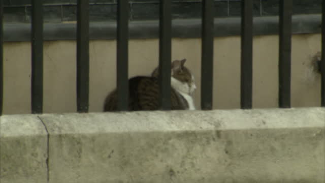 as theresa may prepares to enter downing street david cameron was packing up to leave today larry the cat the chief mouser to the cabinet office... - david cameron politiker stock-videos und b-roll-filmmaterial