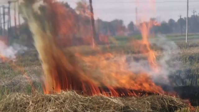 as they light fire to their fields farmers in punjab say they have no alternative to stubble burning to prepare their farm for the next crop - stubble stock videos & royalty-free footage