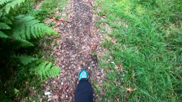pov as woman walks into green forest, view of feet - walking point of view stock videos & royalty-free footage