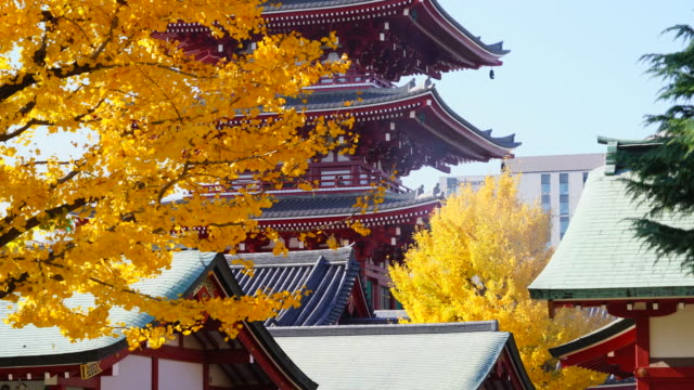 asakusa kannon temple is an ancient buddhist temple located in asakusa tokyo japan it is tokyo's oldest temple and one of its most significant the... - ginkgo stock videos & royalty-free footage