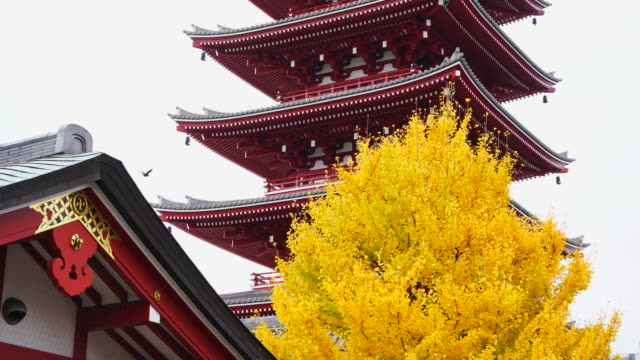 asakusa kannon temple is an ancient buddhist temple located in asakusa, tokyo, japan. it is tokyo's oldest temple, and one of its most significant.... - pagoda stock videos & royalty-free footage