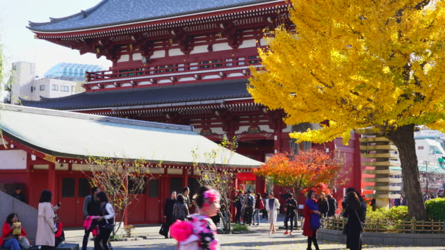 asakusa kannon temple is an ancient buddhist temple located in asakusa tokyo japan it is tokyo's oldest temple and one of its most significant... - ginkgo stock videos & royalty-free footage