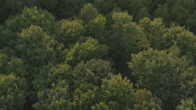ascending aerial drone shot of trees at sunset in german nature preserve - 1941 stock videos & royalty-free footage