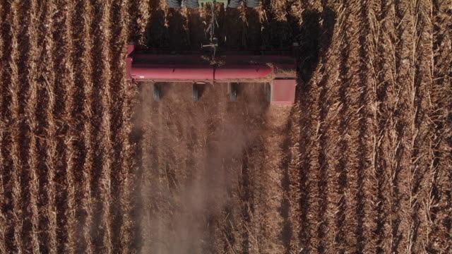 Ascending Aerial Drone Shot Row Header Being Pulled by a Tractor through a Field of Corn at Harvest