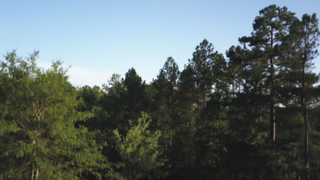 ascending aerial, forest in georgia - georgia country stock videos and b-roll footage