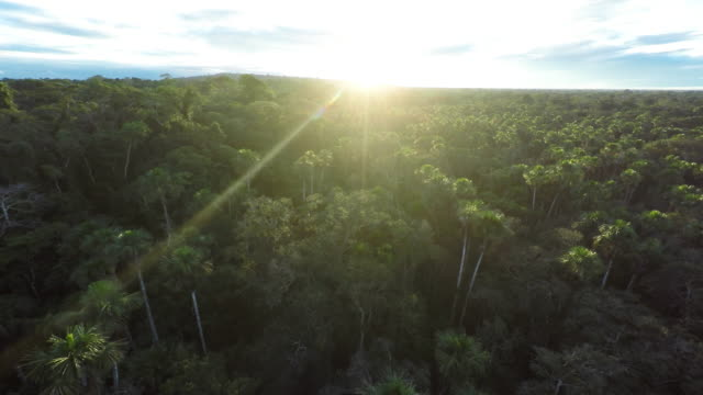 Ascending Aerial over Amazon Rainforest at Sunrise