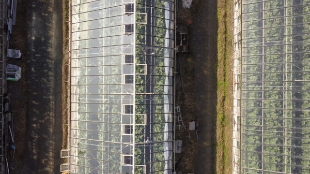Ascending aerial shot of greenhouses