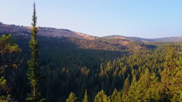 ascending drone shot of evergreen forest in oregon with downward tilt - umatilla stock videos and b-roll footage
