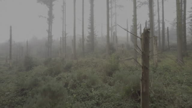 ascending shot of a foggy forest - fallen tree stock videos and b-roll footage