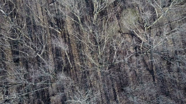 ascending shot of dry leafless treetops - bare tree stock videos & royalty-free footage