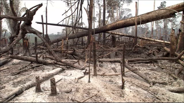 Ash covers the ground in a burned rain forest. Amazon-jungle