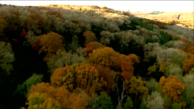 new action plan unveiled england sussex south downs view / aerial mixed woodland on hillside with healthy ash trees scattered amongst other varieties... - ash tree stock videos & royalty-free footage
