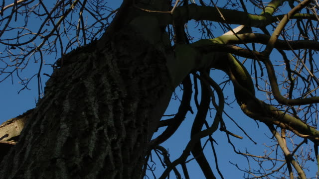 t/l ash (fraxinus sp.) tree and branch shadows against sky, uk - branch stock videos & royalty-free footage
