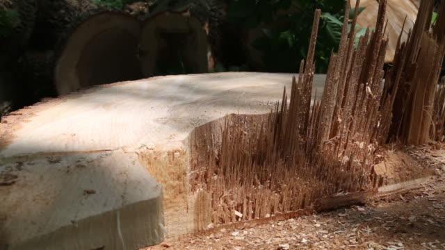 cu ash tree stump - ash tree stock videos & royalty-free footage