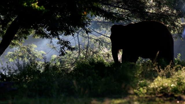 アジア象 - 木を抱く点の映像素材/bロール