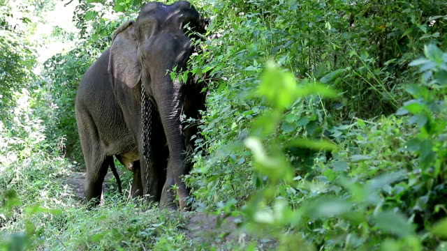 asia elephant - animal family stock videos and b-roll footage
