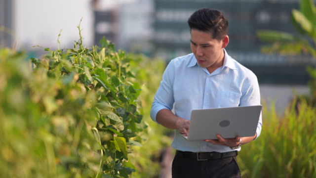 asia men use artificial intelligence and augmented reality in farm to help grow systems, saving water ,resources reduce labor time - control stock videos & royalty-free footage
