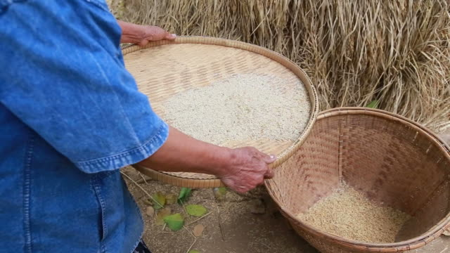asia rice - staple stock videos & royalty-free footage