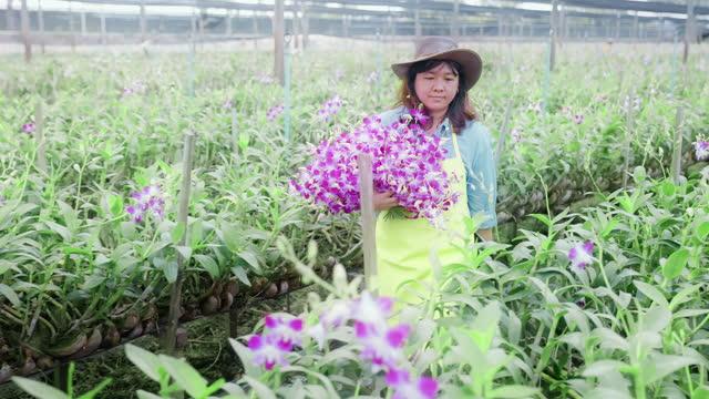 アジア蘭の農場を歩く女性農家は、品質管理、農業または農業産業の概念を収穫または検査します。 - 農学者点の映像素材/bロール