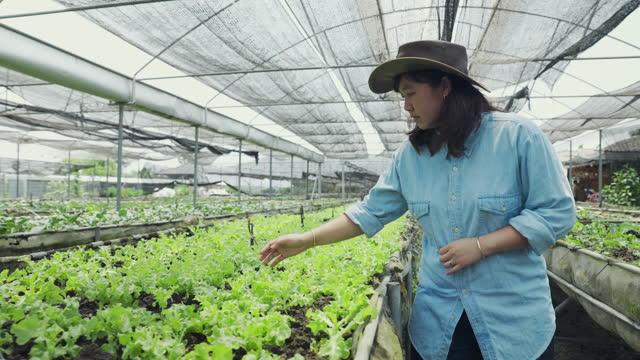 vídeos y material grabado en eventos de stock de los agricultores de asia woman que caminan por los campos agrícolas orgánicos inspeccionan el concepto de control de calidad, agricultura o agroindustria. - granja ecológica