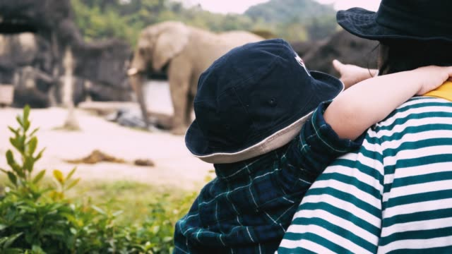 asian baby boy and mother travel in zoo - zoo stock videos & royalty-free footage