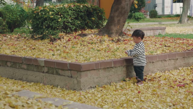 Asian baby boy playing in autumn park