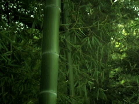 asiatische bambus-wald im wind - malaysische kultur stock-videos und b-roll-filmmaterial