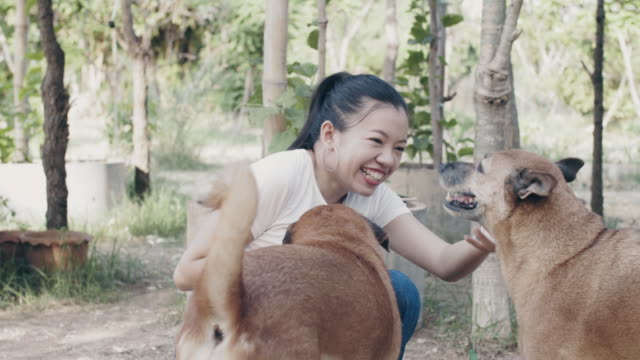 asian beautiful woman playing with her pet dog in backyard garden at home.4k slow motion. - greeting stock videos & royalty-free footage