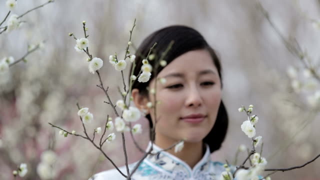 asian beauty - plum stock videos & royalty-free footage