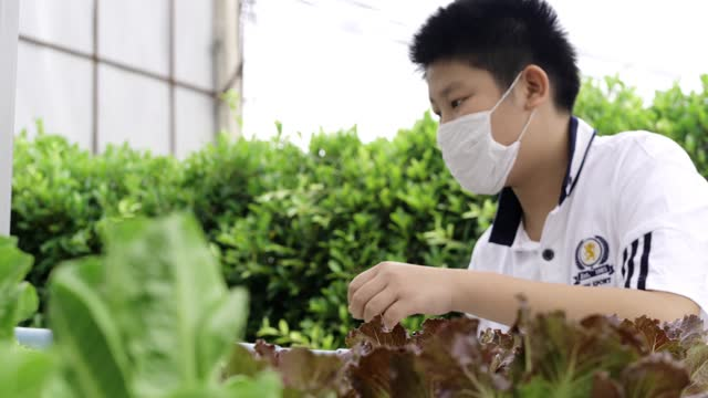 asian boy wearing face mask looking at hydroponics farm, agriculture concept. - butter lettuce stock videos & royalty-free footage