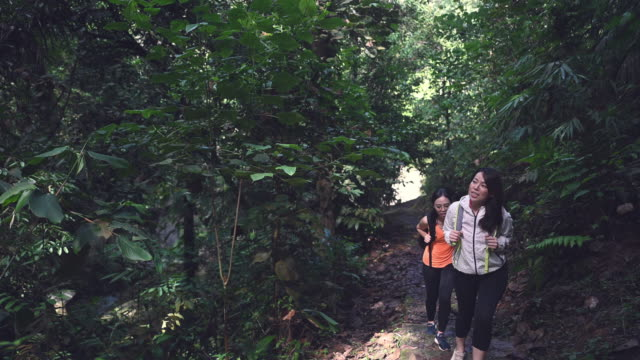 2 asian chinese female sisters walking uphill talking in jungle trekking - eco tourism stock videos & royalty-free footage