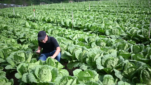 asian chinese male farmer examining his organic farm growth with digital tablet recording - quality control stock videos & royalty-free footage