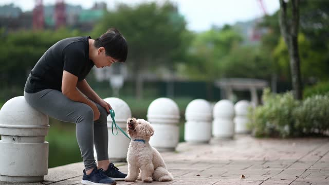asian chinese mid adult short hair female obedience training her pet dog toy poodle in public park bonding together morning - one mid adult woman only stock videos & royalty-free footage