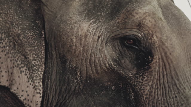 asian elephant in the zoo - captive animals stock videos & royalty-free footage