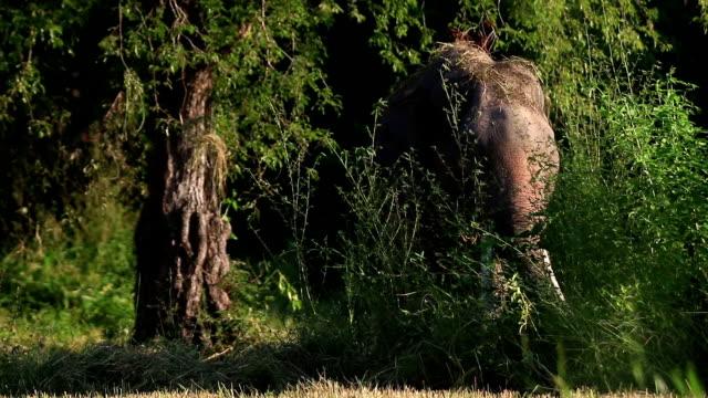 asian elephant (elephas maximus) - animal nose stock videos & royalty-free footage