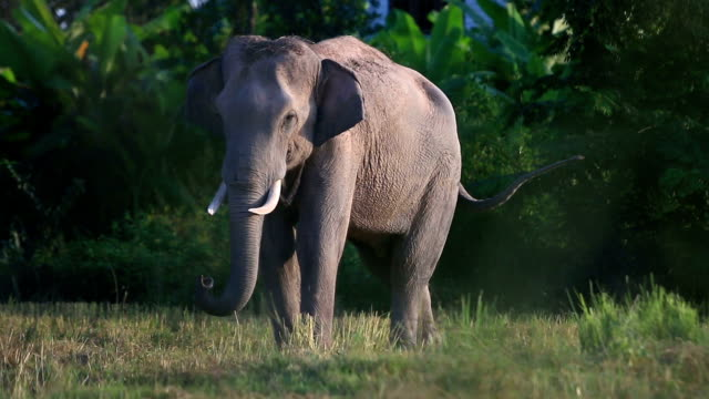 asian elephant (elephas maximus) - tree trunk stock videos & royalty-free footage