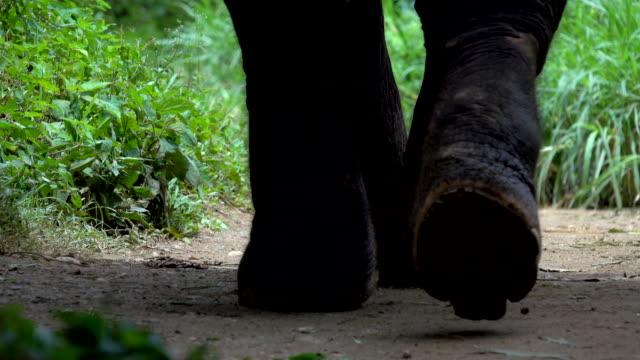 Asiatiska elefanter gå på sökvägen smuts på ett turist elefant läger i Thailand