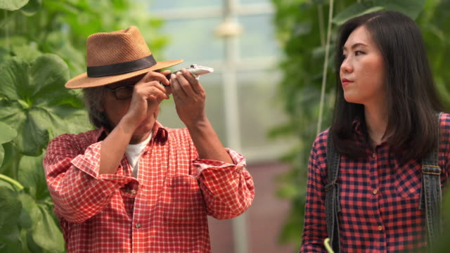 asian famers tested sweetness of the melon crop varieties for research and development , gmo food , biofood concept - genetic modification stock videos & royalty-free footage