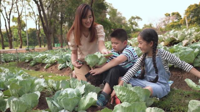 asian family harvesting vegetables from garden - vegetable garden stock videos & royalty-free footage