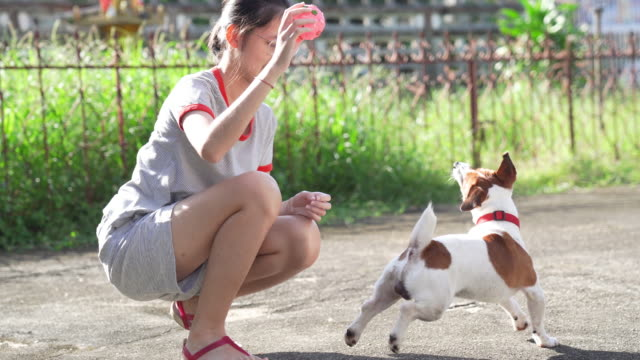 asian family teenage girl playing with playful her pets jack russell terrier dog at garden in summer morning - jack russell terrier stock videos & royalty-free footage