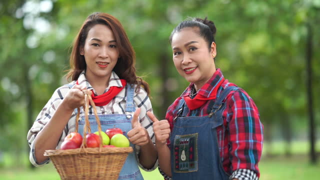 asian family working together in apple farm , thumbs up for good condition - good condition stock videos & royalty-free footage