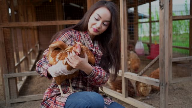 asian farmer in the chicken farm holding a chicken, healthy lifestyle and organic farming concept - poultry stock videos & royalty-free footage